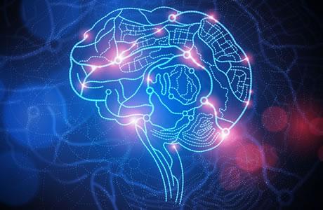 Lic Leer En Innovatiecentrum Brein En Leren